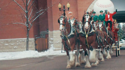 Budweiser Opening Day Clydesdales